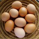 muna; kananmuna