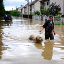 tulva
